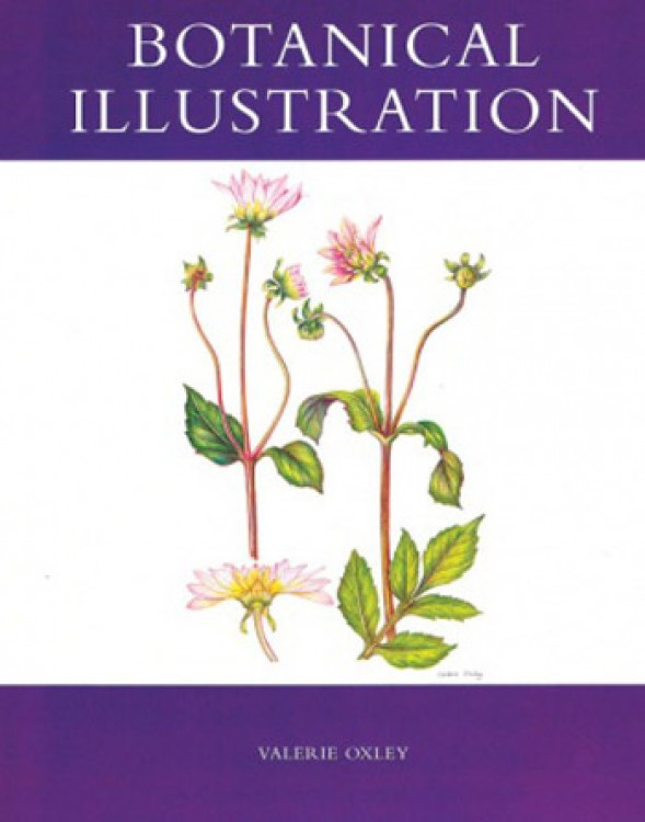 Botanical Illustration : Book by Valerie Oxley