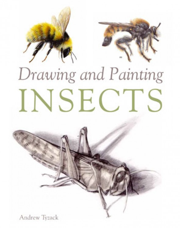 Drawing & Painting Insectsby Andrew Tyzack
