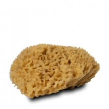 Handover : Natural Honeycomb Sea Sponge : Large Approx. 5 - 6 in