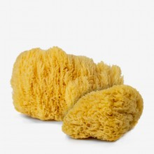 Handover : Natural Sea Sponges